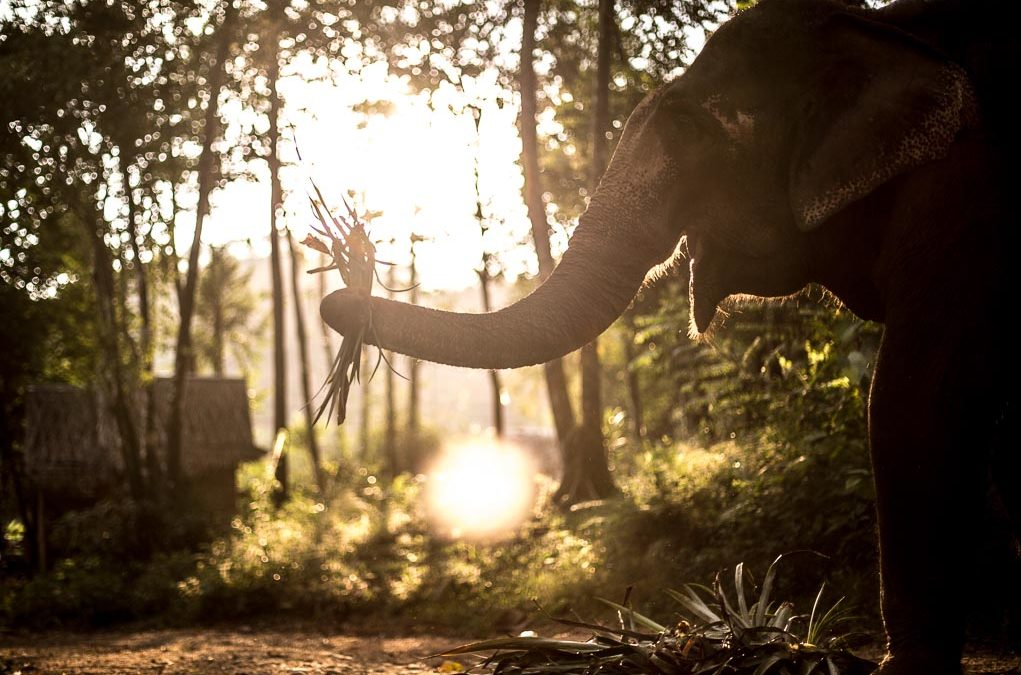 6 Completely Ethical Elephant Sanctuaries in Thailand