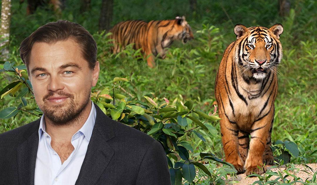 DiCaprio Praises Thai Efforts to Protect Wild Tigers